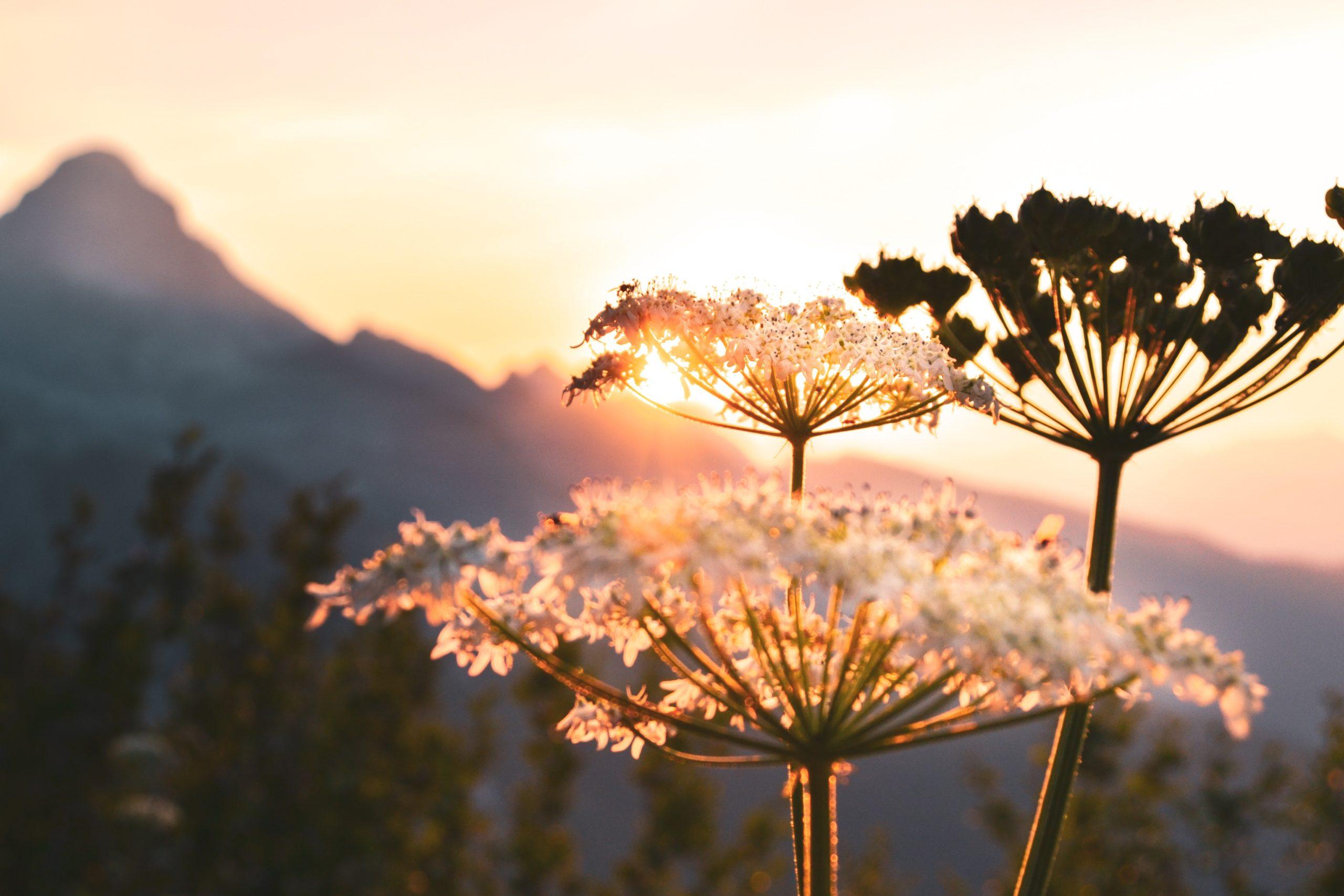 selective focus photograph of dandelion